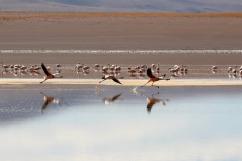 Laguna Hedionda Sur Bolivia