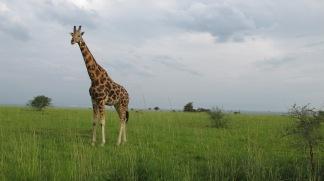 Safari in Oeganda