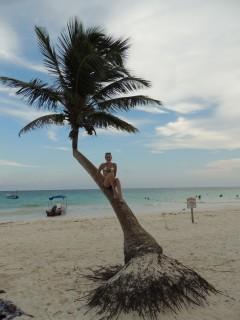 Palmboom klimmen in Mexico