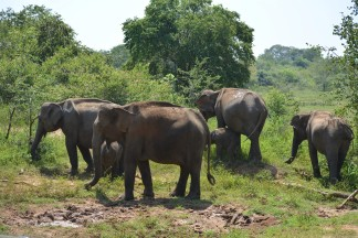 Udawalawe National Park - Backpackjunkies